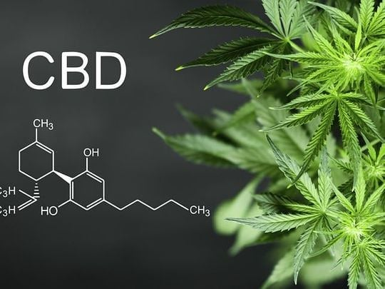 cannabis oil compound cbd with plant