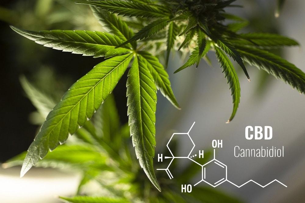 Cannabidiol compound against a hemp leaf background